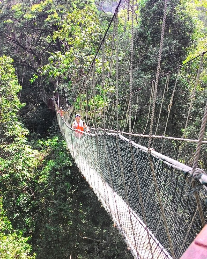 Taman-negara-canopy-walk