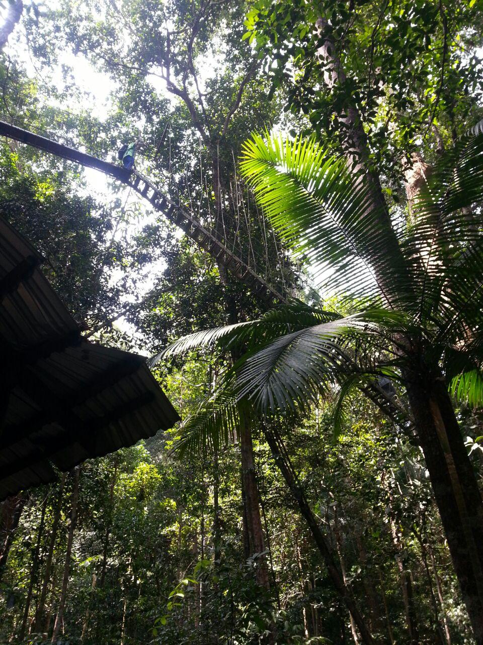 taman-negara-canopy-walk1